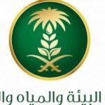 أمانة الرياض تفتتح سوقين موسميين للتمور بالعاصمة